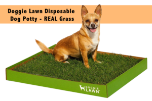 DoggieLawn-Disposable-Dog-Potty