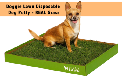 DoggieLawn Disposable Dog Potty – REAL Grass