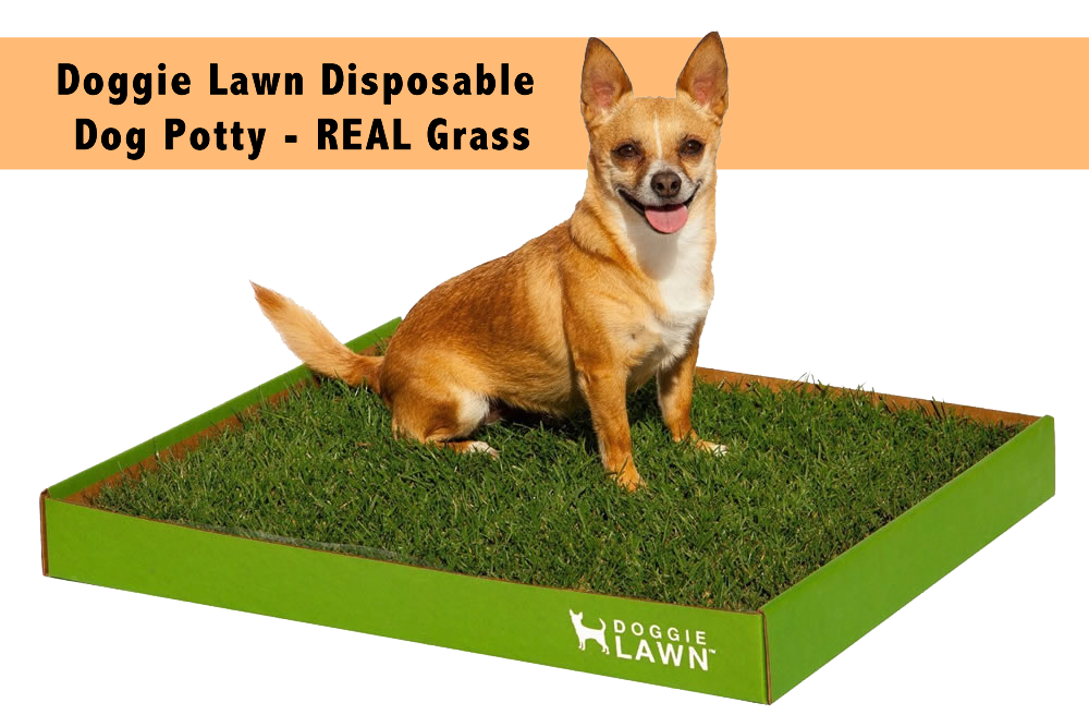 Doggie Lawn Disposable Dog Potty – REAL Grass