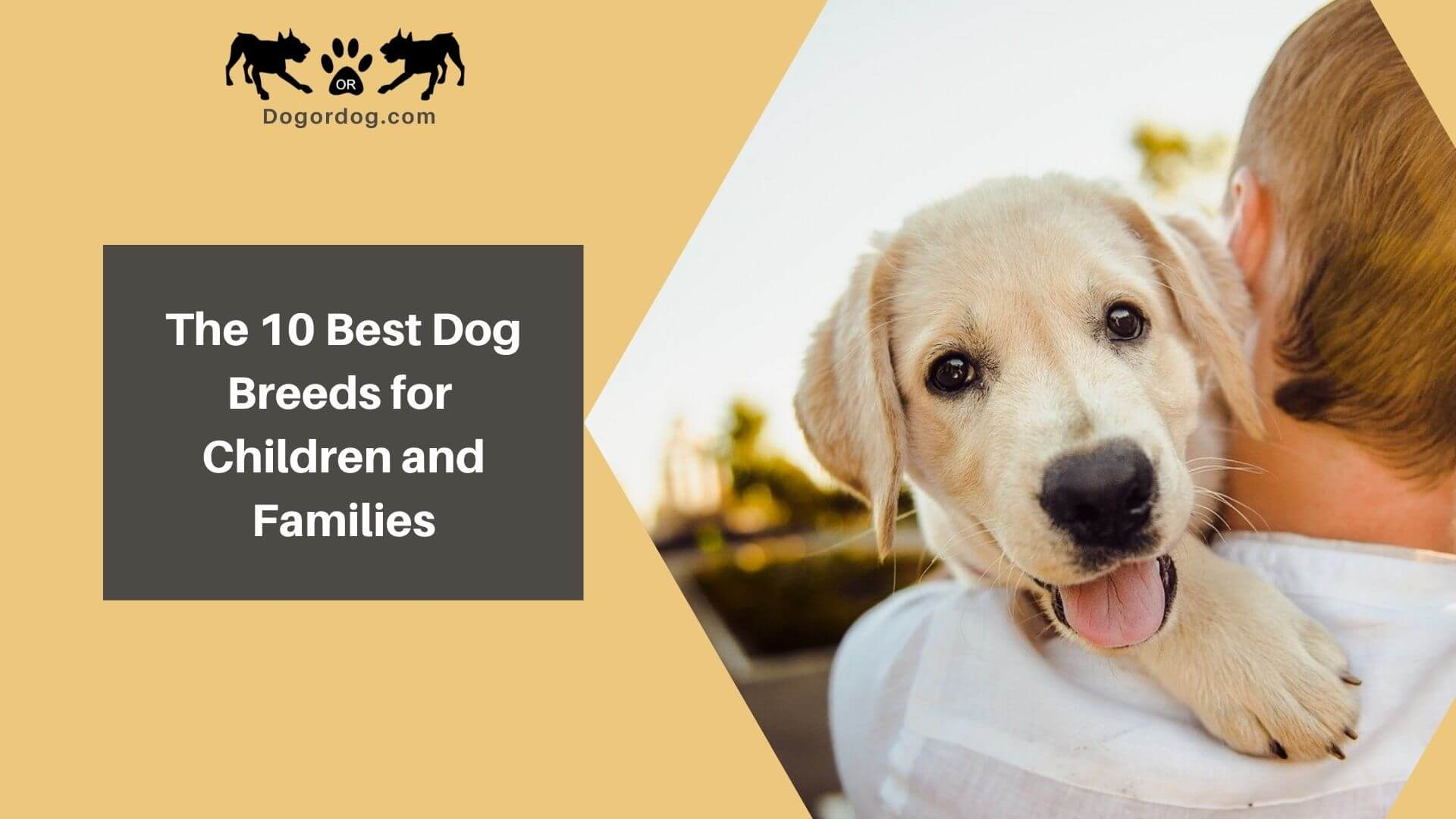 The 10 Best Dog Breeds For Children Families Kid Friendly Dogs