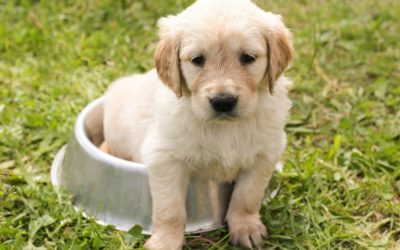 The 10 Best Dog Breeds for Children and Families