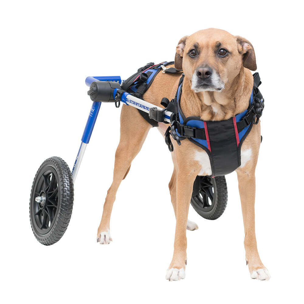 Products for Handicapped & Disabled Pets Supplies Dog