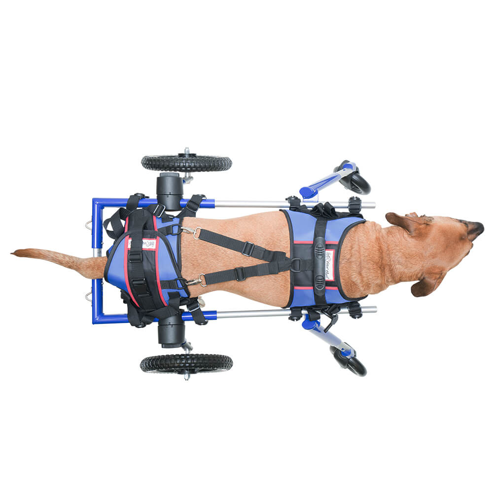 dog lift harness systems for handicapped pets