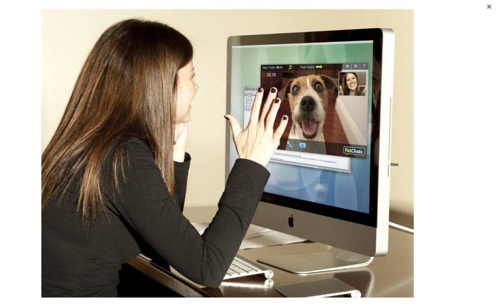 automatic dog treat dispenser