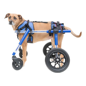 Doggie wheelchair
