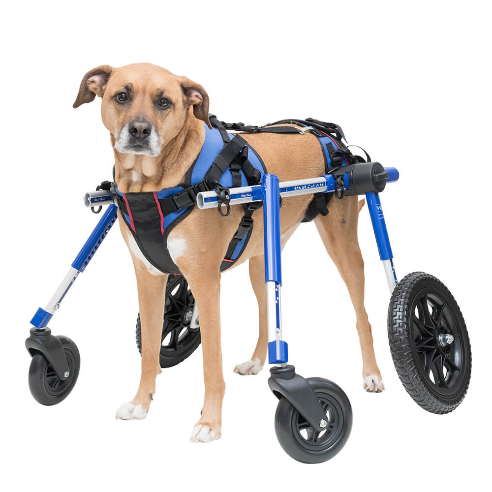 Handicapped Dog Wheelchairs