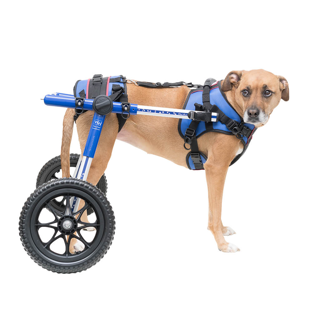 how much does a dog wheelchair cost