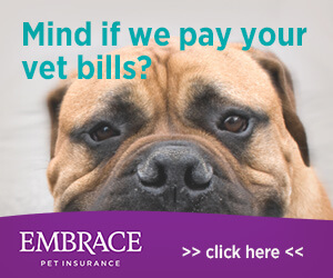 Pet insurance that covers pre existing conditions