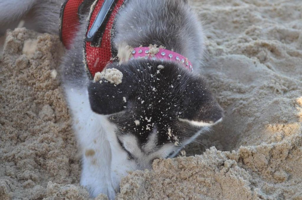 How do you keep a dog from digging