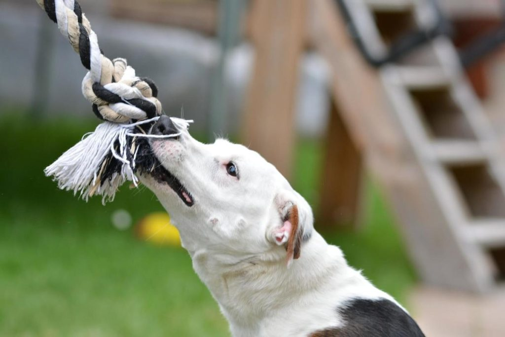 How do you stop a dog from chewing