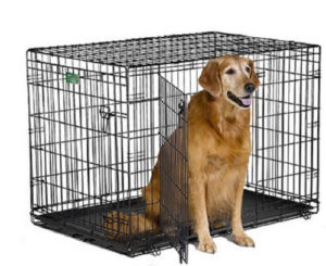 how to crate potty train an older dog