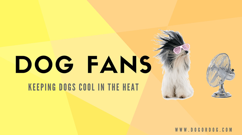 Dog Fans – Keeping Dogs Cool in the Heat and Prevent Heat Stroke
