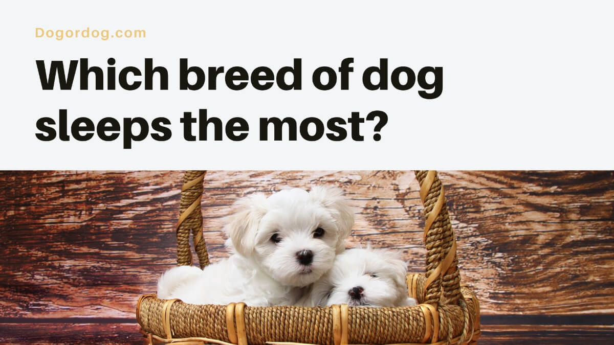 Which breed of dog sleeps the most?