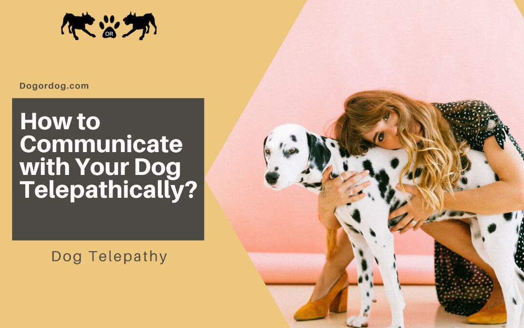 How to Communicate with Your Dog Telepathically
