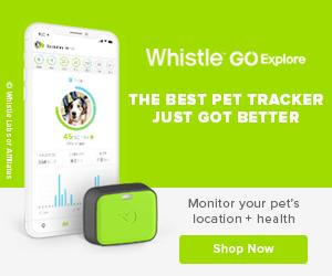 buy whistle GPS tarcker