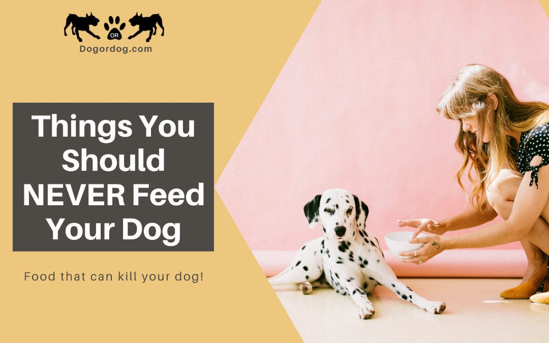 What Can't Dogs Eat – Things You Should NEVER Feed Them