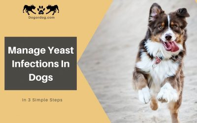 3 Simple Steps To Manage Yeast Infections In Dogs