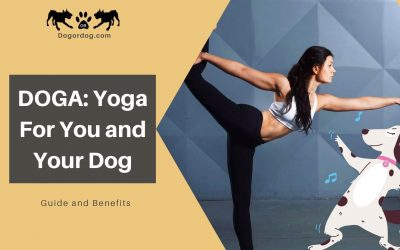 DOGA: Yoga For You and Your Dog – Guide and Benefits