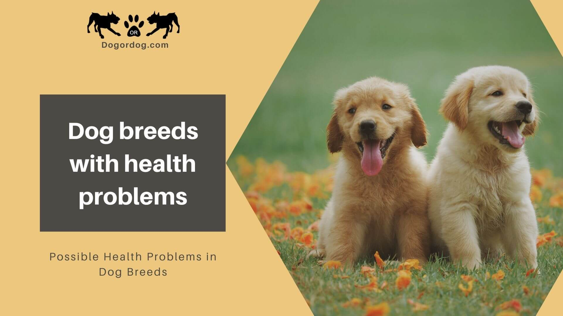 dog breeds with health problems
