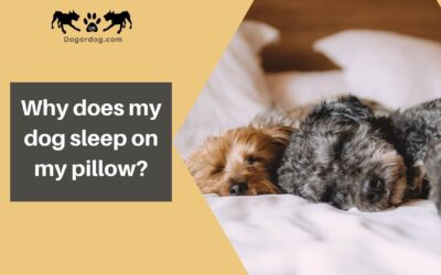 Why does my dog sleep on my pillow?