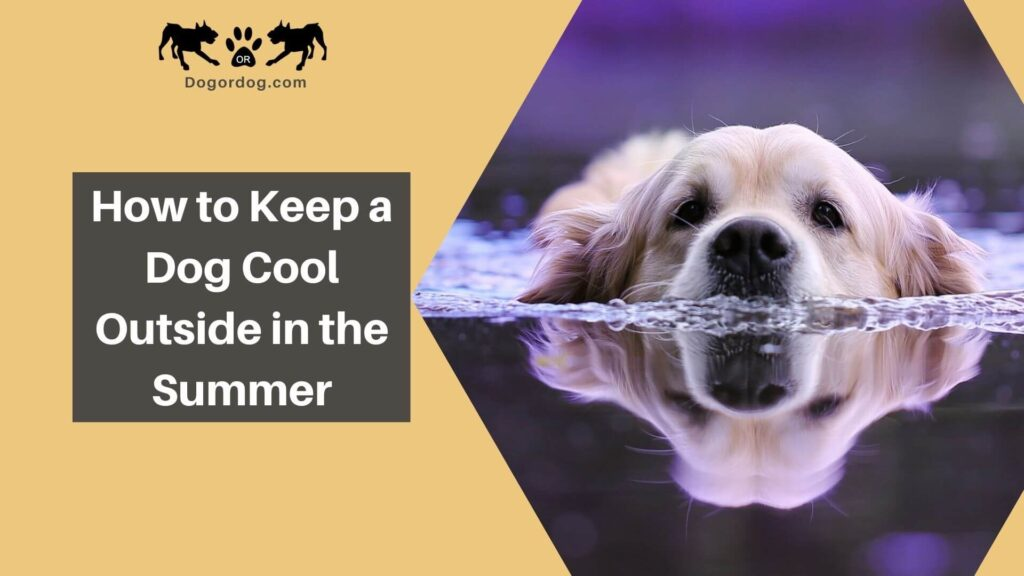 how to keep a dog cool outside