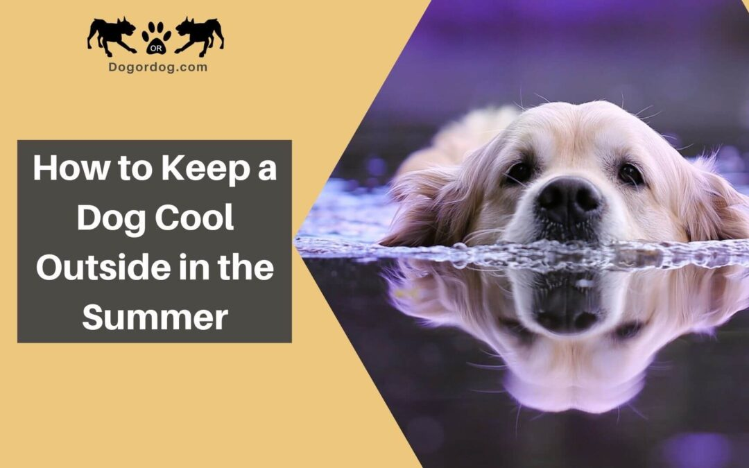 How to Keep a Dog Cool Outside in the Summer