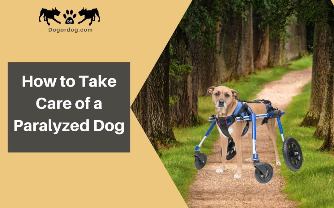 How to Take Care of a Paralyzed Dog