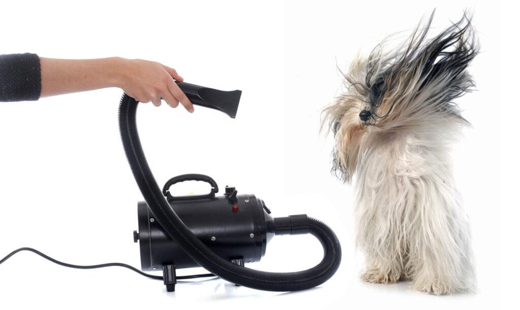 best dog hair dryer