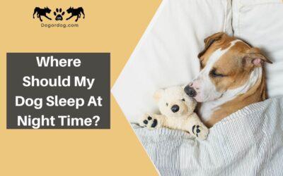 Where should my dog sleep at night time?