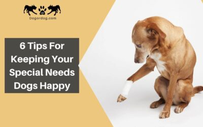 6 Tips for Keeping Your Special Needs Dogs Happy and Healthy